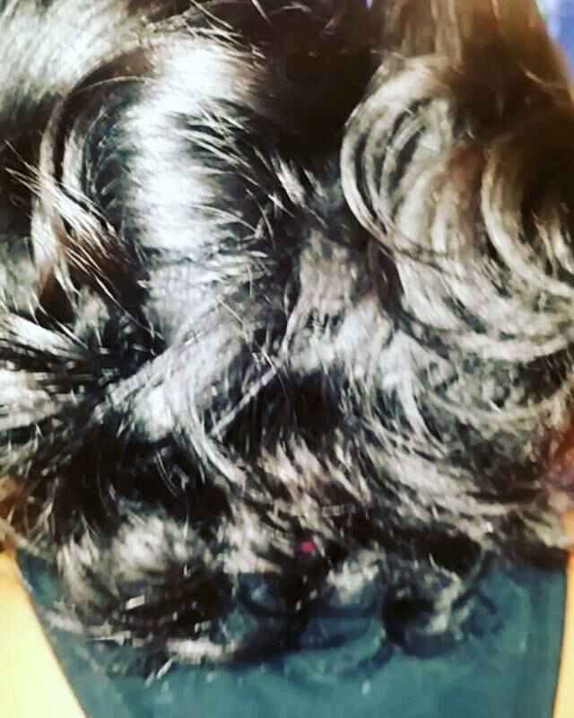 May your bounceback be as legit as these curls.  #beautyconcierge #bounceback #ceramicfusion #silkpress #dominicanblowou...